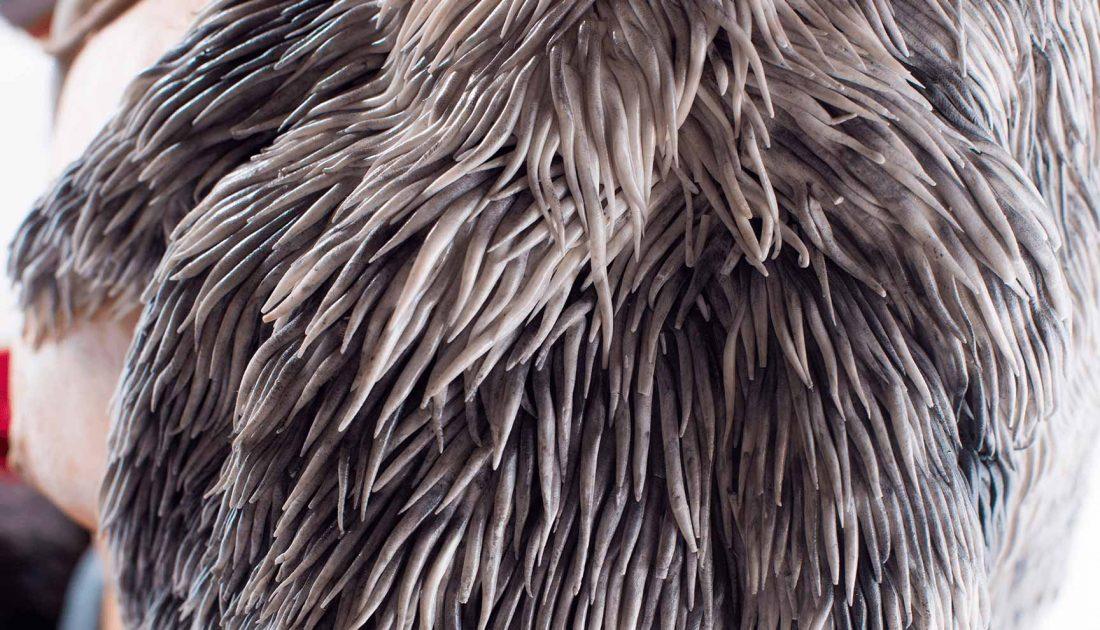 fondant-hair