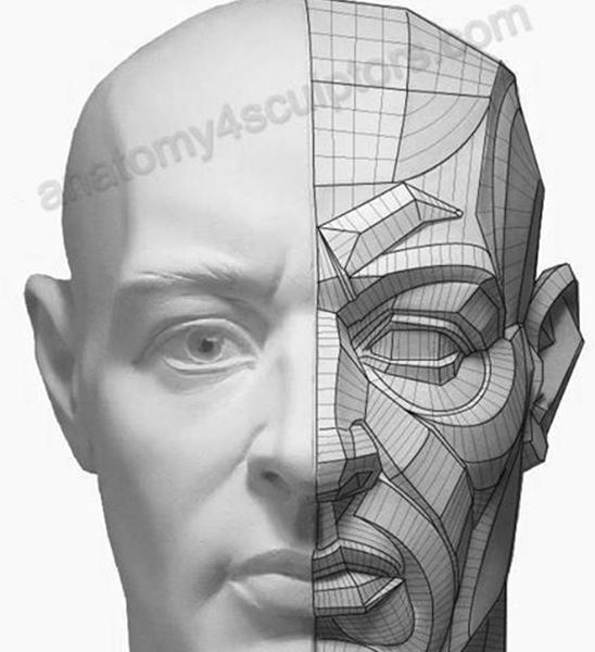 proporciones-rostro-humano